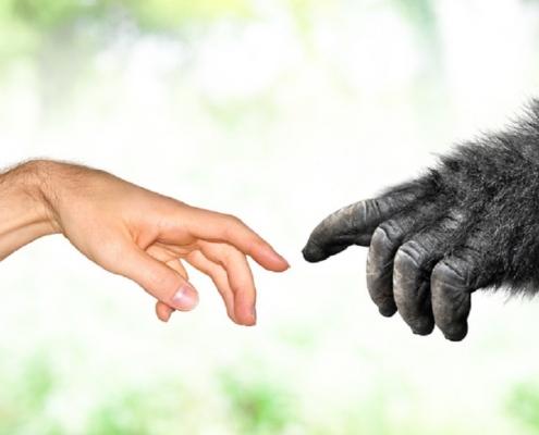 rozmawiaj ze swoim szympansem