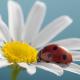 Warsztaty uważności mindfulness